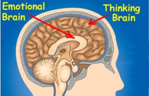 think-and-feeling-brain